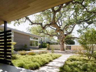 This house is designed to form  a horseshoe shape surrounding a 100-year-old oak tree